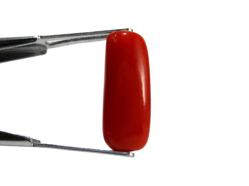 Red Coral - 4.83 Carat - GFE04058 - Image 2